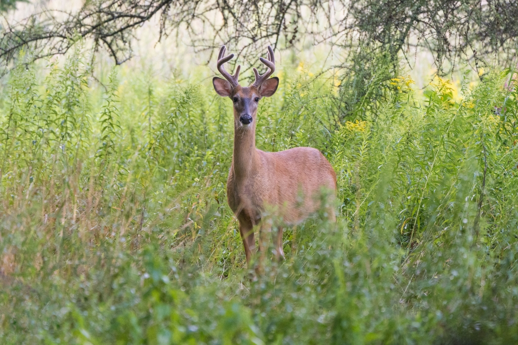 MADISON, Wis.– The Wisconsin Department of Natural Resources (DNR) is reminding hunters of their first opportunity to pursue deer this...